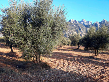 Can Farrés – Olive oil