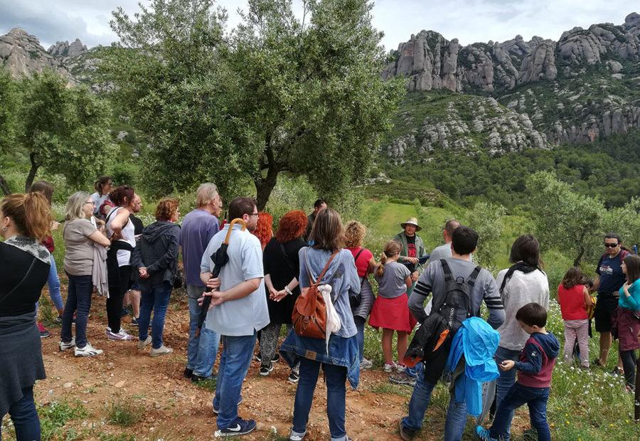 Visita guiada pels camps d'Oliveres del Bruc